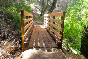 There was a new bridge on the trail, just not where I thought it was going to be.