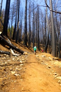Burned trees = exposed trails