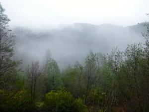A foggy morning in Auburn!