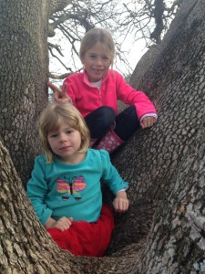 My monkeys just climbed trees and had a blast playing around