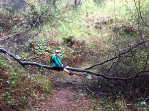 Fallen Tree!