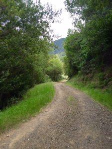 QS trail